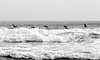 pelicans and surf, near San Juan del Sur, Pacific coast, Nicaragua, Central America