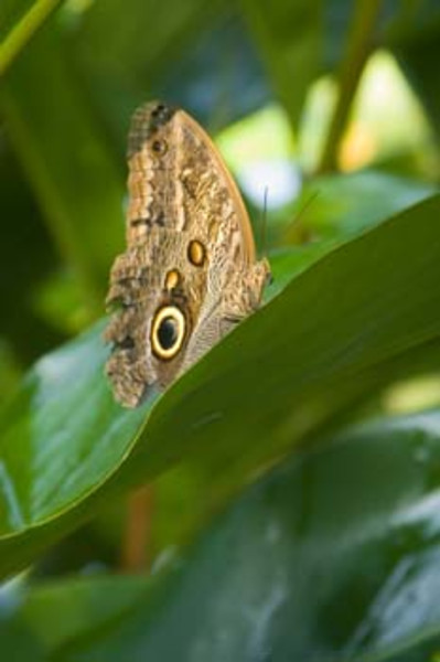 butterfly farm, Morgan's Rock Hacienda & Eco-lodge, San Juan del Sur, Nicaragua, Central America