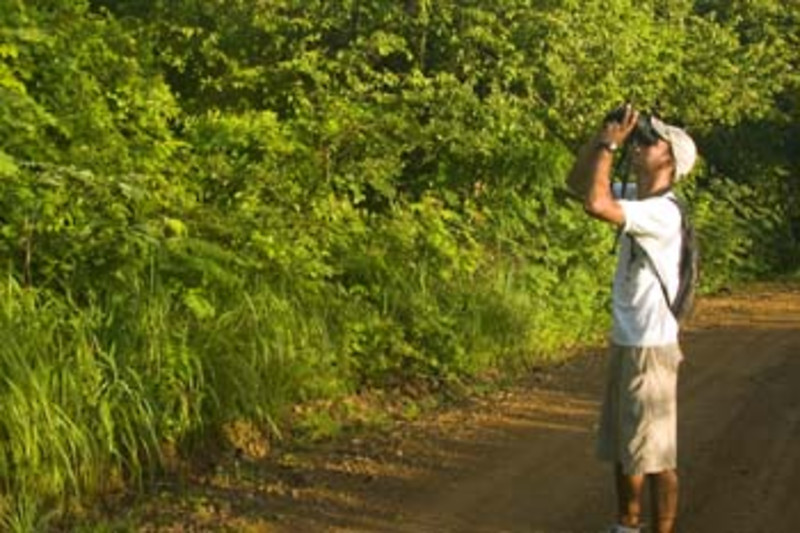 birdwatching, Morgan's Rock Hacienda & Eco-lodge, near San Juan del Sur, Pacific coast, Nicaragua, Central America