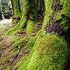 Mossy forest detail at Dervaig, Isle of Mull, Scotland, U.K.