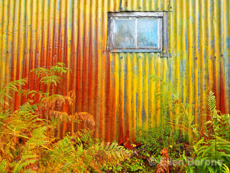 Colorful chicken shed and autumn bracken, Isle of Mull, Scotland, U.K.