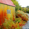 Colorful chicken shed, autumn bracken and rain soaked road, Isle of Mull, Scotland, U.K.