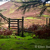 Forest trail gate at Dervaig, Isle of Mull, Scotland, U.K.