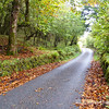 Fall scenic, back country road, Isle of Mull, Scotland, U.K.