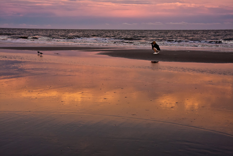 Tourist photographing sea birds, Hilton Head Island beach, South Carolina, USA, North America.