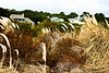 Autumn dune grasses and beach houses, Hilton Head Island beach, South Carolina, USA, North America.