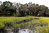 Salt marsh and live oaks, Coastal Discovery Museum at Honey Horn, Hilton Head Island, South Carolina, USA, North America.