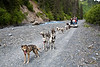 In Seward, summer or winter, grab a seat on a dog sled and mush a two-mile trail through the Alaskan wilderness to the base of Resurrection Mountain and along Box Canyon Creek with Ididaride Sled Dog Tours.