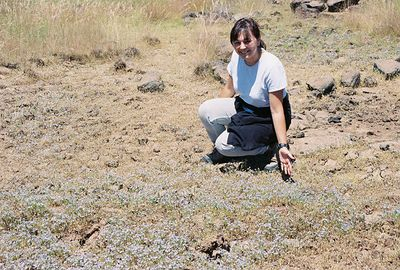 7/3/05 Arleen in a field of Bacigalupi's Downingia. County Rd 73 southbound heading back to Hwy 299. Modoc County, CA