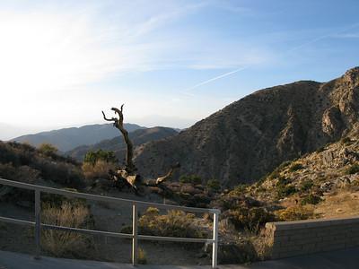 Diane's California Joshua Tree National Park Photos