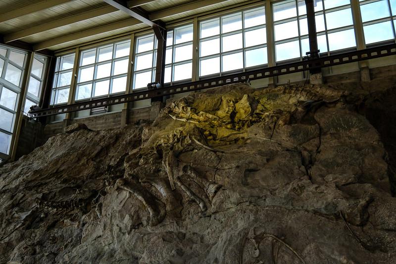 Dinosaur National Monument. Fossil bone quarry.