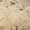 Dinosaur Tracks, Dinosaur Valley State Park
