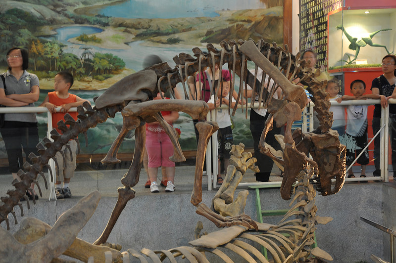 Another view of <i>Monolophosaurus</i> savaging the poor, gentle herbivore <i>Tuojiangosaurus</i>.   Wonder what the kids are learning from this...?  You can see why I'm always fleeing from this beast...!