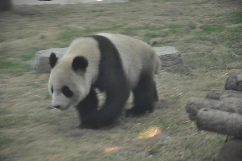 You can see Panda when you look out your window, or when you turn on your television. You can feel Panda when you go to work, or when go to church or when you pay your taxes....
