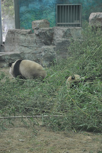 Panda surrounds us, it penetrates us, it binds the galaxy together...