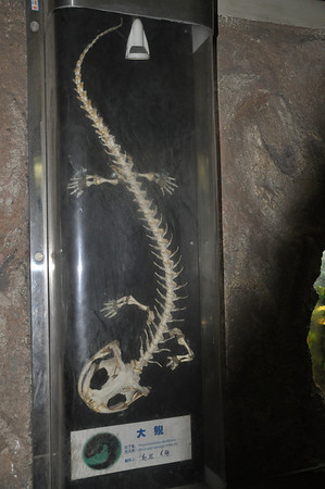 """Dinosaurs Along The Silk Road"" -- Sinofossa 2009 3: Beijing Zoo"