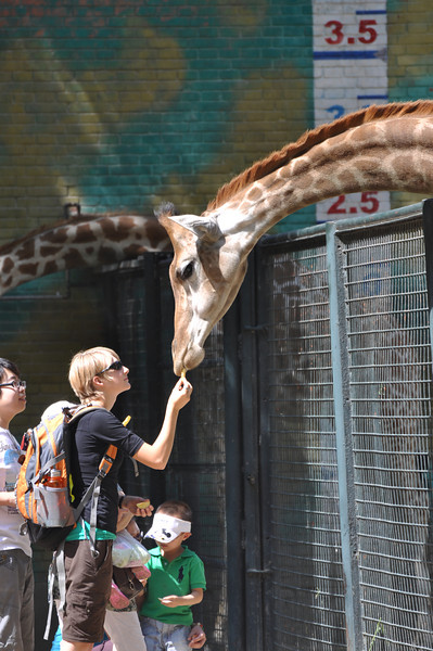 Brenna feeds a giraffe.  First a nibble...