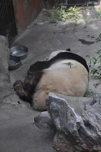 Panda is everywhere...