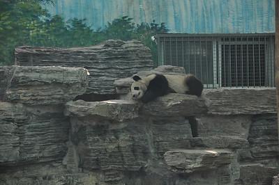 Join Panda...it's BLISSSSSSSS...