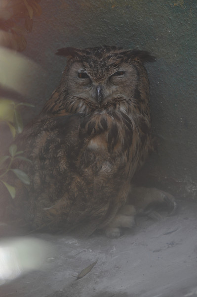 Sleepy owl!