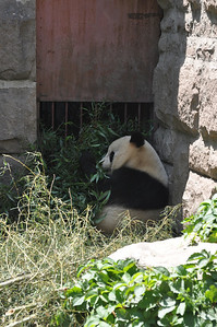 What do Pandas eat?  Why, Romantic Bamboo Love, of course!