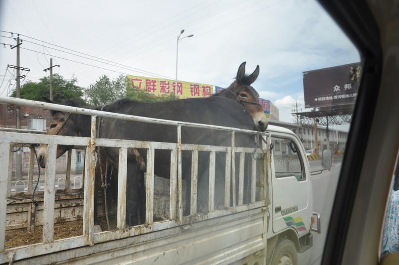 Donkeymobile!