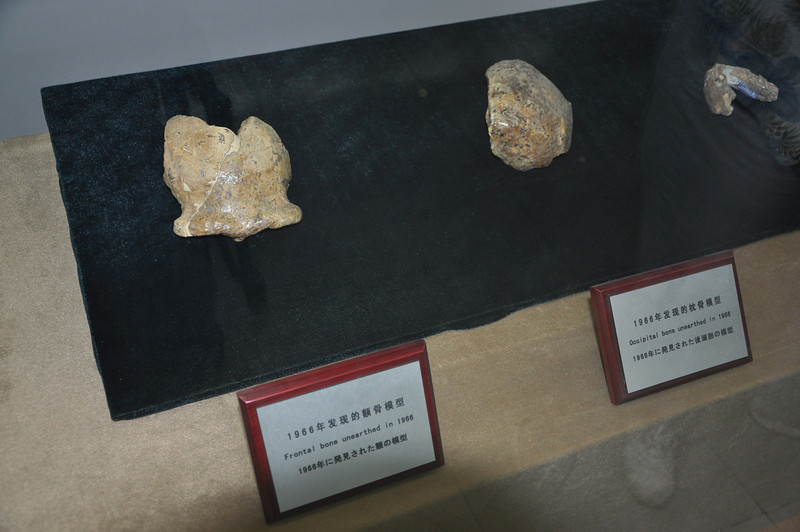 After the teeth (seen earlier), <i>Homo erectus</i> skull material began to be found, including some skull caps (left and center) and a mandible (lower jaw, right).