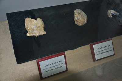 After the teeth (seen earlier), Homo erectus skull material began to be found, including some skull caps (left and center) and a mandible (lower jaw, right).