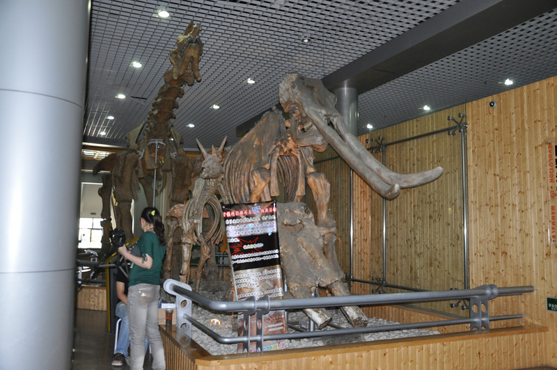 This is the entrance to the museum's fossil mammal hall.  (Actually, it's most <i>of</i> the hall; the rest is on the other side of the wall to the right.)  On display here are a mammoth (and a skull), the giraffoid <i>Samotherium</i>, and, most impressively, the giant, hornless rhino <i>Indricotherium</i>.  <i>Indricotherium</i> was the largest land mammal ever, even bigger than elephants (such as the mammoth to its right).  I'd never seen a mounted <i>Indricotherium</i> before, and it's damned impressive!  ...just virtually impossible to photograph in this room because of the pillars (left) and the inability to get far enough away from the mount to get it all in!