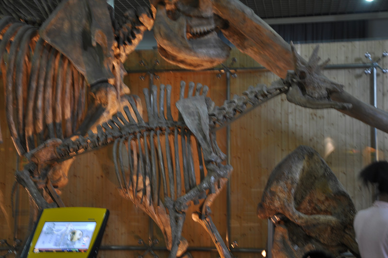 <i>Samotherium</i> -- actually a relative of modern giraffes!