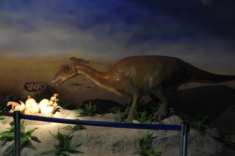 Here's mama <i>Maiasaura</i> tending to her nest of hatchlings, reconstructing a scene from the Late Cretaceous of Montana.  This was one of the best of the rubberosaurus displays.