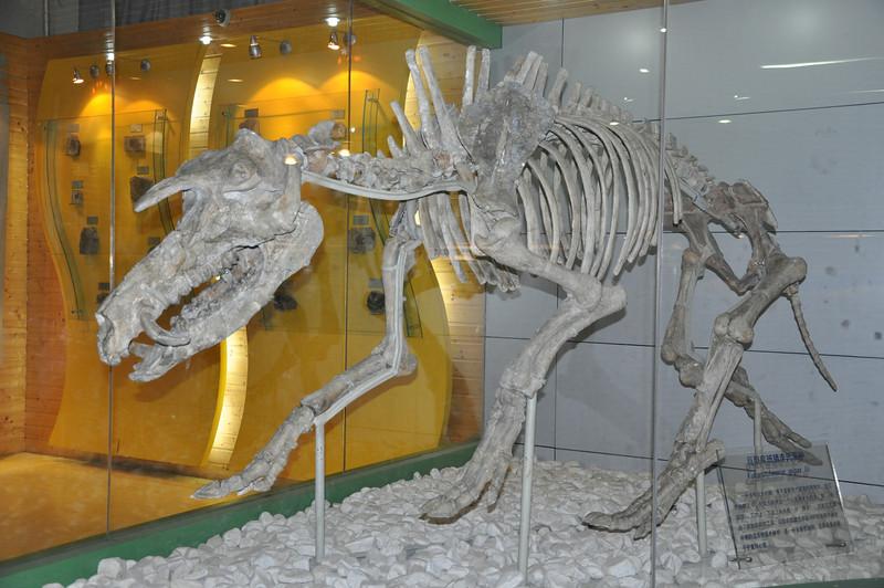 A giant (and rather terrifying) Miocene pig called <i>Kubanochoerus</i>.
