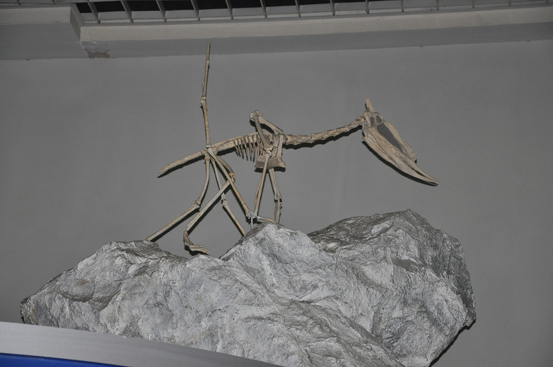 ...but they also had a rare mount of a pterosaur in quadrupedal posture on the ground.  This was a very cool addition to the exhibit, but it was kind of tucked up in a high corner of the room, so I'm not sure how many people actually spot it!