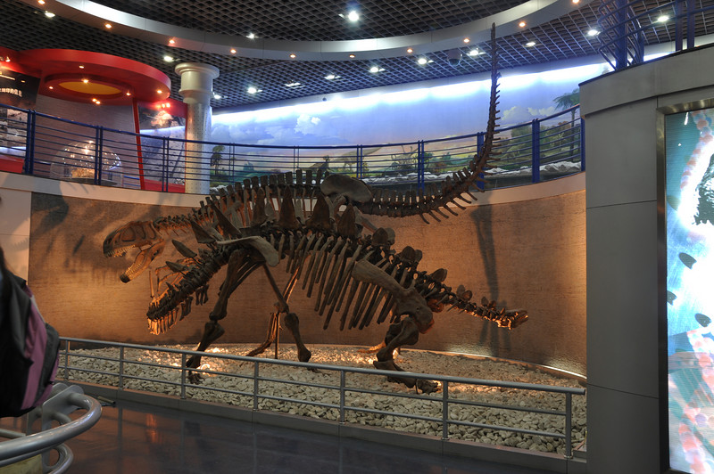 "I believe that this exhibit -- another in the ""wanton carnage"" category of exhibits (every museum has at least one!) -- features the allosauroid theropod <i>Yangchuanosaurus</i> versus the stegosaur <i>Tuojiangosaurus</i>.  Poor <i>Tuojiangosaurus</i>...it always gets the short end of the stick, doesn't it?"