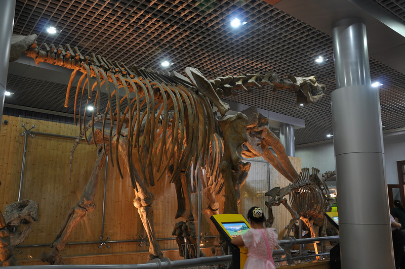 Another angle of <i>Indricotherium</i> and its friends.