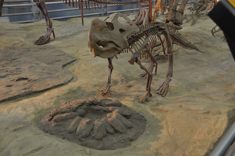 Another view of the <i>Protoceratops</i>-guarding-its-nest display. For purely historical reasons, it's still nice to see exhibits like this.