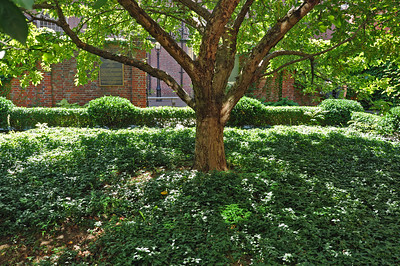 A beautiful shade tree in the middle of a memorial garden in the North End