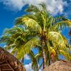 Quintessential Caribbean
