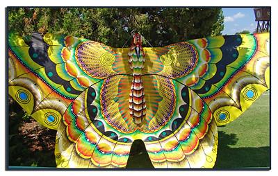 A BIG Moth kite!