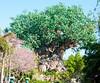 • Animal Kingdom<br /> • Tree of Life