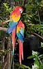 • Animal Kingdom<br /> • Macaw Parrot
