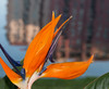 • Wyndham Bonnet Creek Resort<br /> • Bird of Paradise