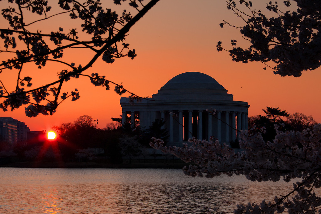 Jefferson memorial right at sunrise.  In the foreground are silhouettes of Cherry Blossoms.