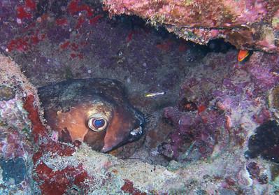 2013 Diving - Mauritius