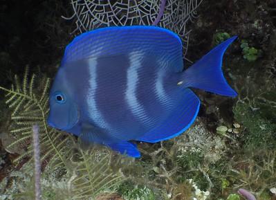 Bahamas ; Mar 2018