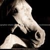 Horse portrait close-up