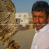 Desert bird of prey, falcon