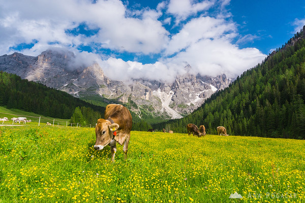 A sunny summer day in Val Venegia