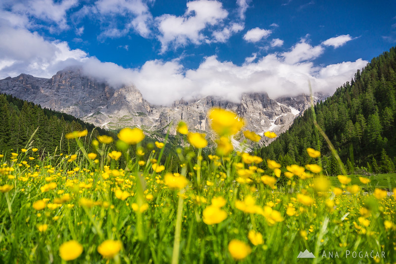 Colorful meadows in Val Venegia