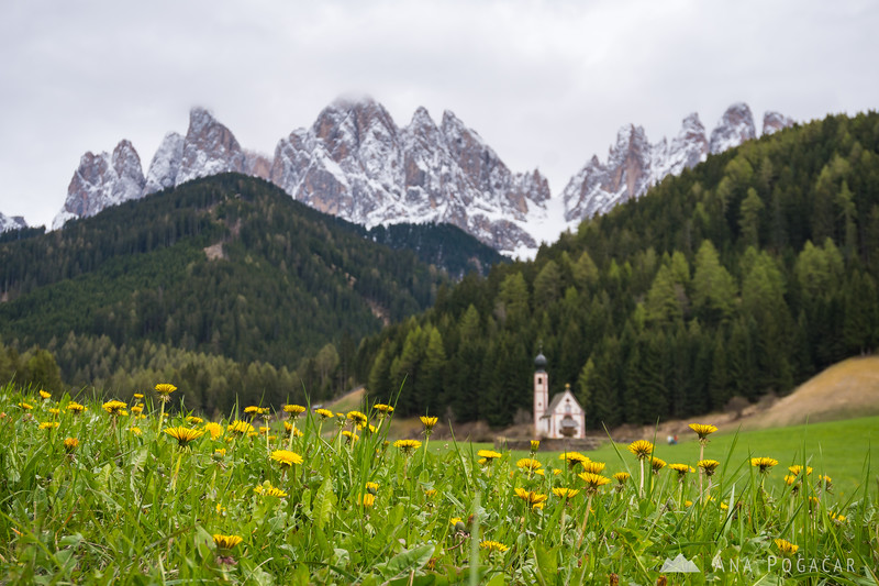 San Giovanni church with dandelions and the Odle range